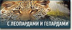Постельное белье с леопардами и гепардами