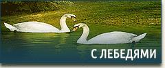 Постельное белье с лебедями